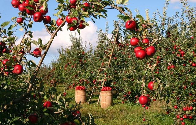 jabloňový sad